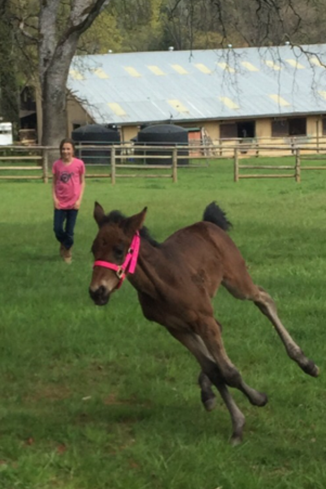 Thanks his is the orphan filly doing zoomies I lost her Mom big heart ache